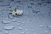 rain-drops-412465_960_720